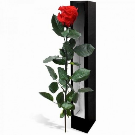 Rose à longue tige - Fleurs stabilisées