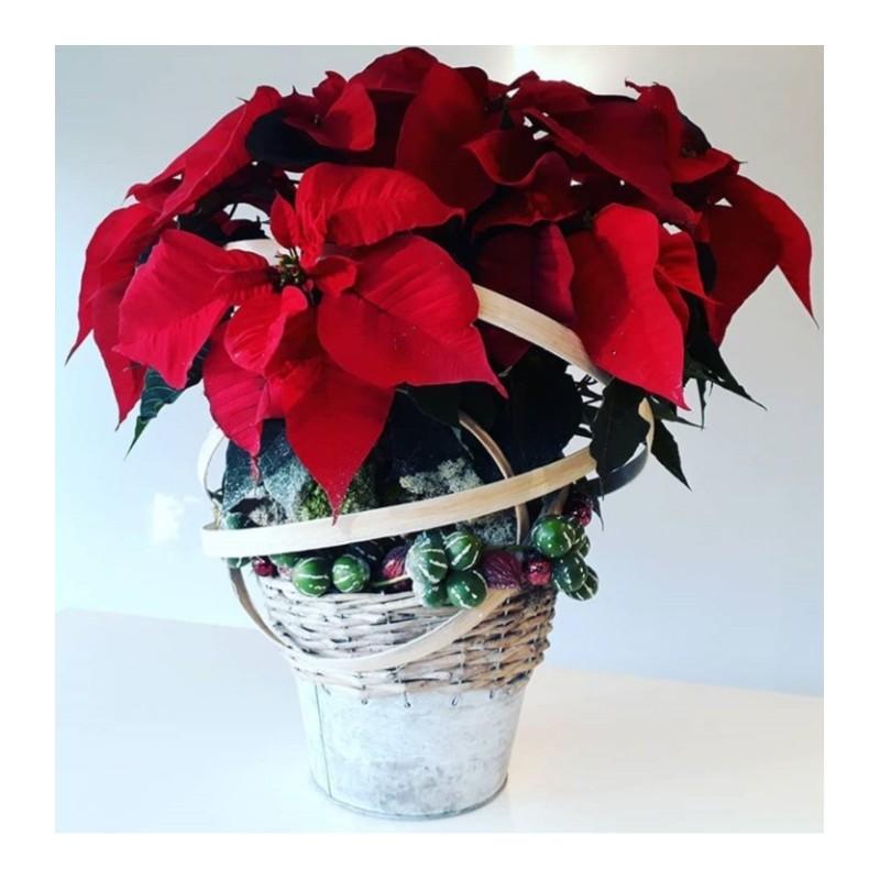 Poinsettia Kerst Decoratie
