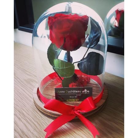 Rose éternelle sous cloche - Déclaration d'amour, Fleurs stabilisées
