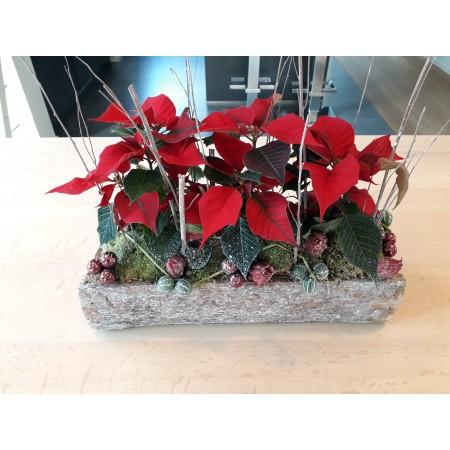 Compositie Poinsettia's - Kerst-decoratie