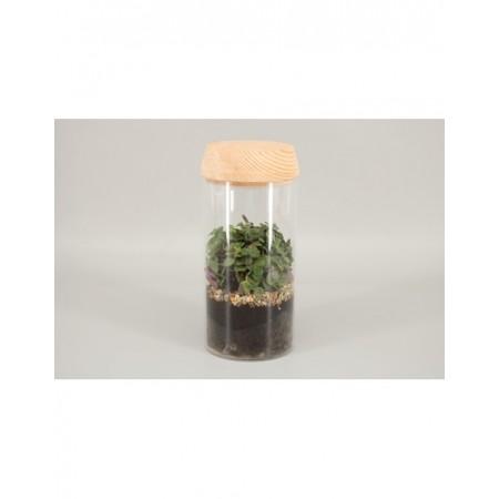 Terrarium - Plantes vertes et terrarium