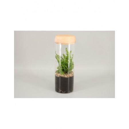 Terrarium - Groene planten en terrarium