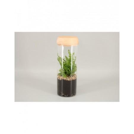 Terrarium with light