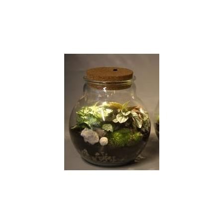 Terrarium avec lumière - Plantes vertes et terrarium