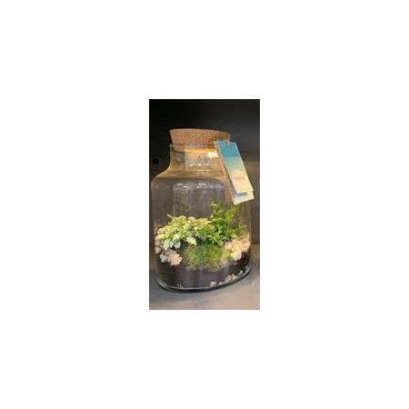 Terrarium with light - Foliage plants and terrarium