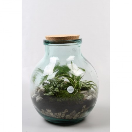 Terrarium - Foliage plants and terrarium