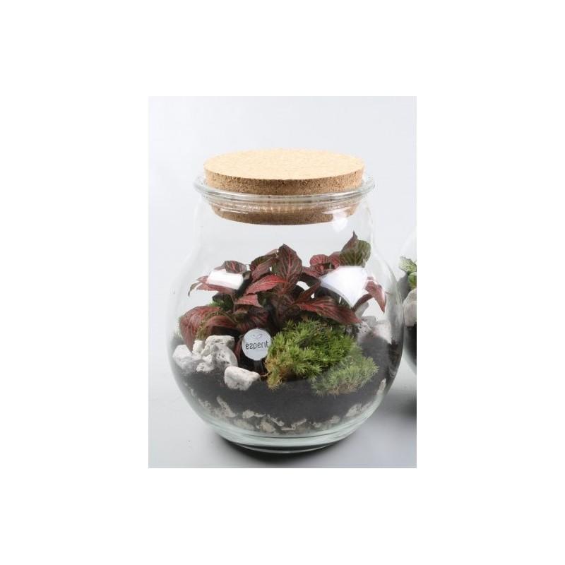 Terrarium - Foliage plants and terrarium