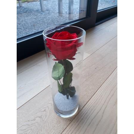 Rose éternelle dans vase - Fleurs stabilisées