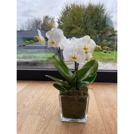 Orchid Tablo modern - Flowering plants
