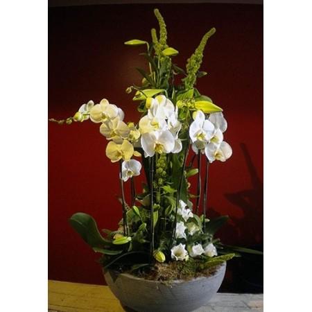 Orchidées quand tu nous tiens - Arrangements
