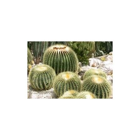 Cactus - Plantes d'intérieur dépolluantes