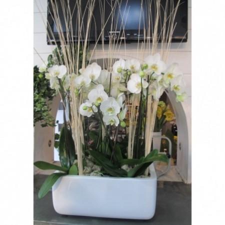 Vasque d'Orchidée - Plantes fleuries