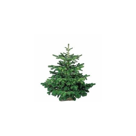Sapin de Noël (Nordmann) - Sapins de Noël