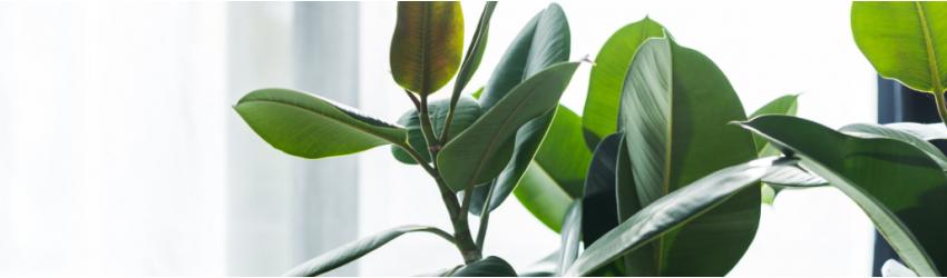 Foliage plants and terrarium